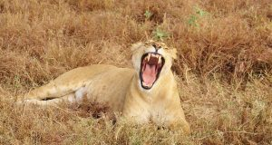 7 Things You Can Strike Off Your Bucket List By Visiting Kenya