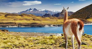 Luxury Patagonia Tours By Yacht: Discover A Destination Like No Other