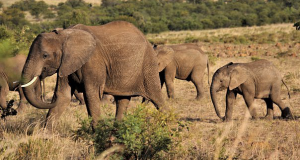 Planning to Travel to Africa? Here are Important Things You Should Do